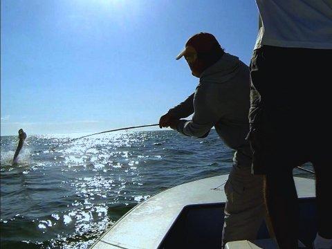 tarpon fishing Boca Grande